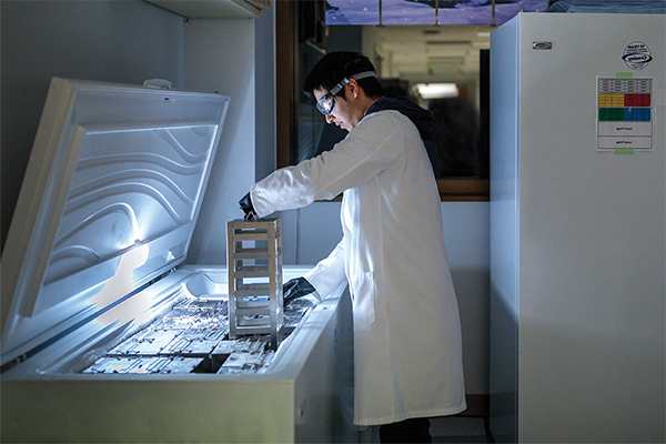Medical student researcher I-Ling Chiang pulls bacterial cultures from a freezer in the Stappenbeck lab